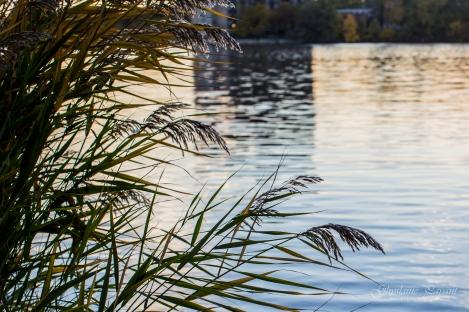 Réflexions sur l'eau